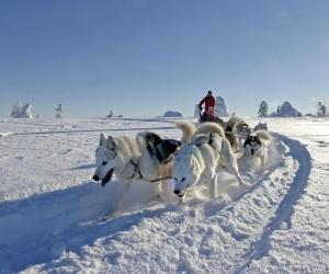 Lappland aktiv erleben